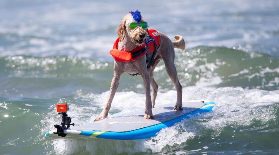 Incredible Dog Challenge Makes ESPN TOP 10